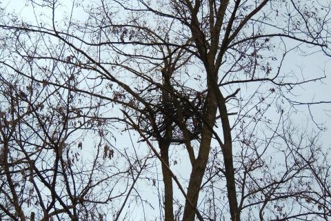 New nest for eagles