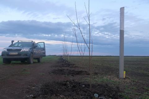 Tree planting for habitat restoration